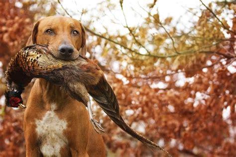 100 Hunting Dog Names  Music Lyrics Zone