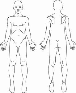 Clipart - Male Anatomy Front And Back Line Art