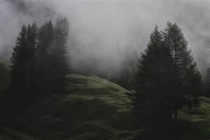 Evergreen Desktop Trees Foggy Mist Fog Montagne