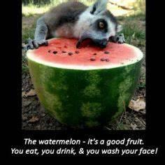 1000+ images ab... Cute Lemur Quotes