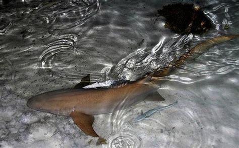 requin dormeur requin dormeur picture of pension vekeveke