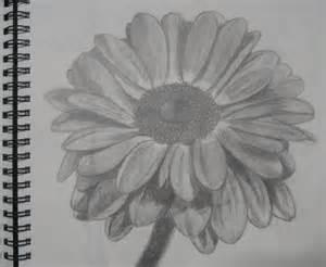 Flower Pencil Sketch