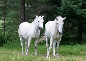 White Horse ♡ - Horses Photo (35203656) - Fanpop