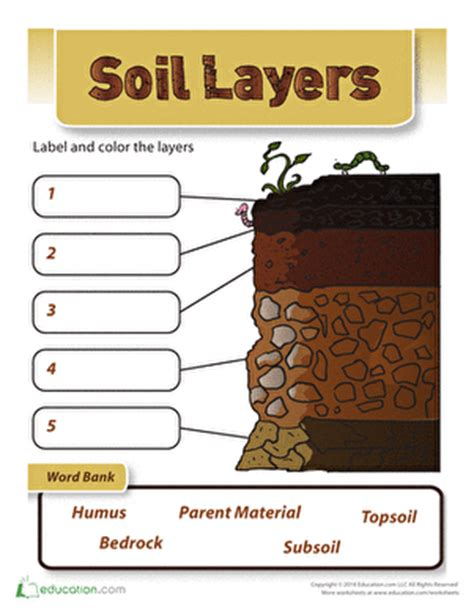 soil layers worksheet education