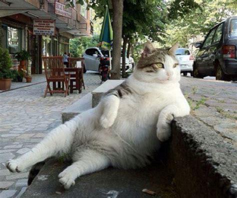 die  witzigsten katzen selfies bravo