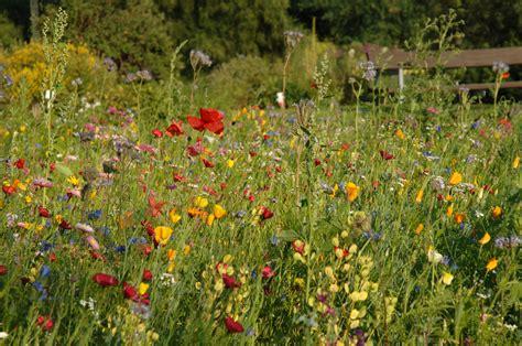 Botanischer Garten Kiel Telefon by Uni Kiel Vom Nutzen Der Vielfalt