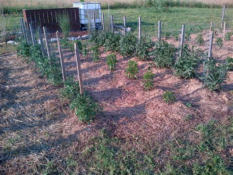 mulching your garden 3 simple tips to growing a bigger garden once you ve planted old world garden farms