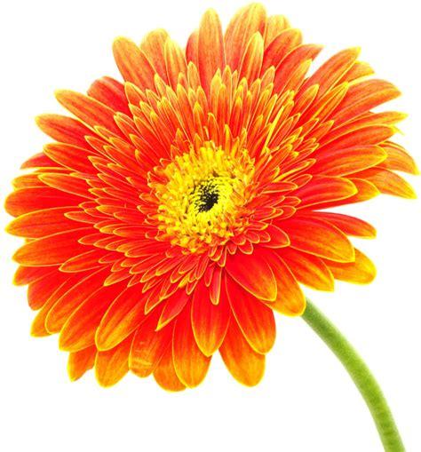 fairless garden center photos for fairless garden center yelp