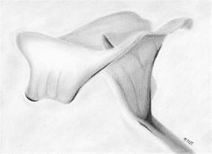 Calla Lily Drawing by Mark Denton