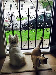 Dog doors for sale nzdog and puppy care mr modern with a for Dog doors for sale