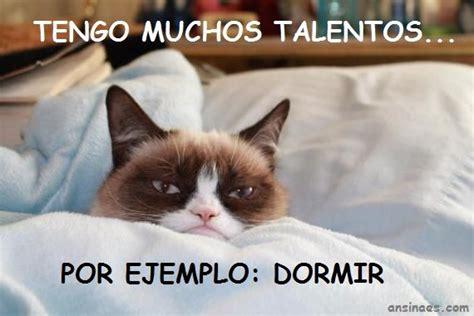 Gato Meme - memes gato gru 241 on en http ansinaes com cats d pinterest meme