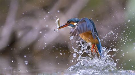 Support us by sharing the content, upvoting wallpapers on the page or sending your own. Blue Bird Figurine Birds Fish Water Drops 4K HD Wallpapers | HD Wallpapers | ID #31486
