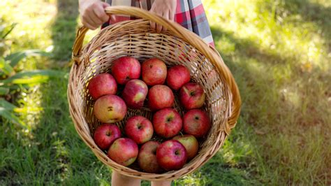 Here's What Happens When You Eat An Apple Every Day
