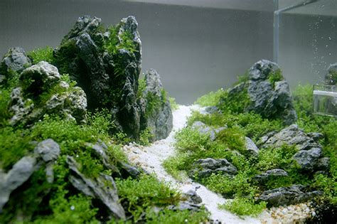 45cm Layout, First Aquascape In China (also Pics Of Fish