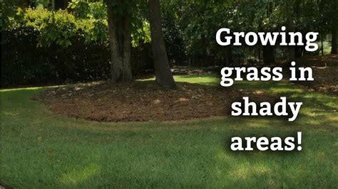 Will Bermuda Grass Grow In The Shade?