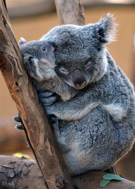 hug   squeeze   call  miah