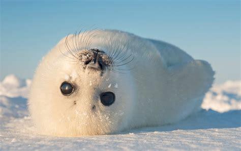 seals eat