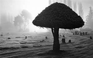 Tree Wallpaper Black And White | PixelsTalk.Net  White