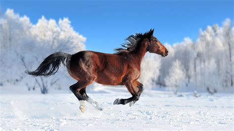 horse cool backgrounds horses animal background animals snow hd run amazing