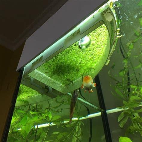 lentille d eau aquarium stl gratuit barri 232 re flottante aquarium pour lentille d eau cults