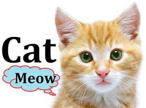cats meowing sounds cat animals for children kindergarten