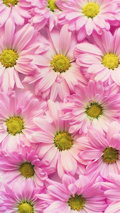 Iphone Spring Summer 6s Wallpapers Backgrounds Flower