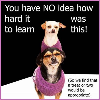Quotes Dog Funny Treat Trick Dogs Tricks