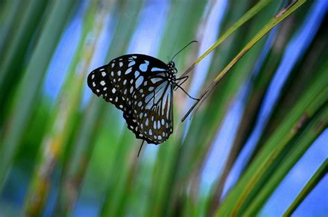 beautiful butterfly pictures incredible snaps