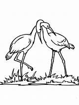 Coloring Stork Couple Para Colorear Printable Realistic Cigueñas Dibujo Supercoloring Una Pareja Tablero Seleccionar Coloringtop Categories sketch template