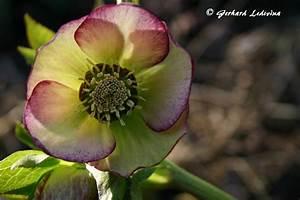 Welche Blumen Blühen Im Oktober : blumen keine geschichte nur gedichte ~ Bigdaddyawards.com Haus und Dekorationen