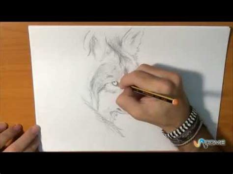 disegnare  lupo  maniera realistica youtube