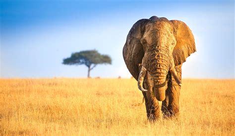 6 Days Bwindi Gorillas & Masai Mara Safari - Standard ...