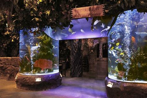 aquarium 224 l entr 233 e picture of rainforest cafe marne la vallee tripadvisor