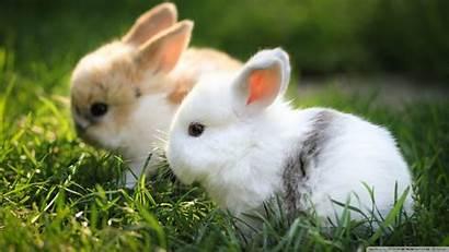 Bunnies Desktop Wallpapers Bunny Background 1080 Rabbits