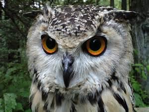 フクロウ:月収がどのくらいあればフクロウを飼えますか?参考にしたい ...
