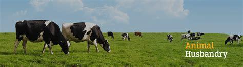 loan  animal husbandry agricultural finance federal