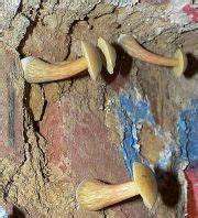 Pilze Wachsen Kellerwand : mauertrockenlegung aufsteigende feuchte nasse w nde ~ Lizthompson.info Haus und Dekorationen