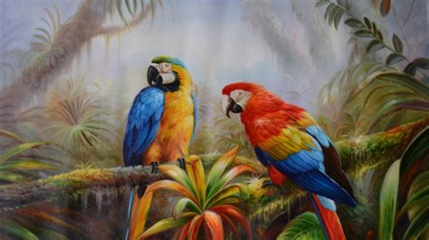 jungle parrot exotic birds pictures  hd wallpaper