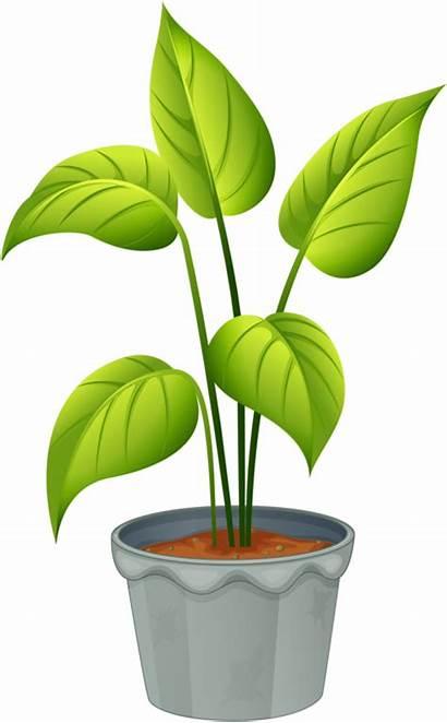 Plants Plant Clipart Flowering Budding Non Transparent