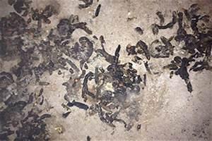 Marder Im Dach Vertreiben : wie sieht marderkot aus marderkot wie erkennen sie ob es ein marder ist stv biologie forum ~ Orissabook.com Haus und Dekorationen