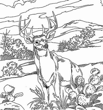 Deer Coloring Pages Adult Hunting Printable Adults