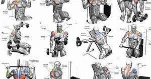 Shoulder Workout Routines - 5 Tips For A Safe And Effective Shoulder Workout