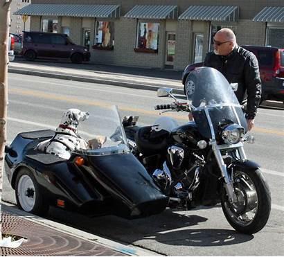 Biker Sidecar Dogs Riding Dog Ride Spirit