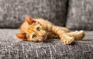 Katzen Fernhalten Von Möbeln : tierlexikon zu hunden katzen agila ~ Michelbontemps.com Haus und Dekorationen