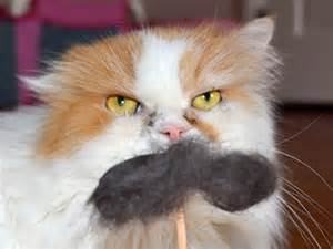 hairball cat cats with mustaches for national hairball awareness day