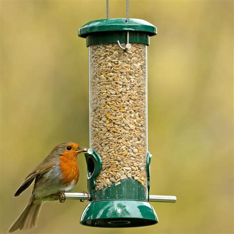 adding a new bird feeder to your yard