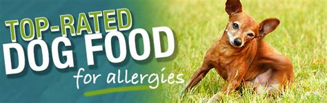 dog food  dogs  allergies