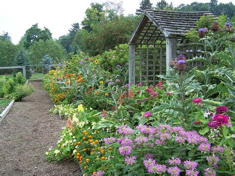 photos of vegetable gardens how to draw vegetable garden
