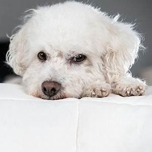 Anti Allergie Hund : allergikerhunde hund trotz allergie halten tierisch wohnen ~ Orissabook.com Haus und Dekorationen