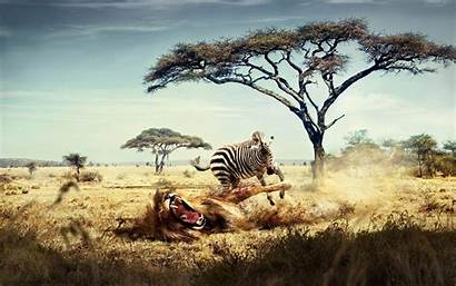 Africa Wallpapers Background Wild Animals Computer Animal